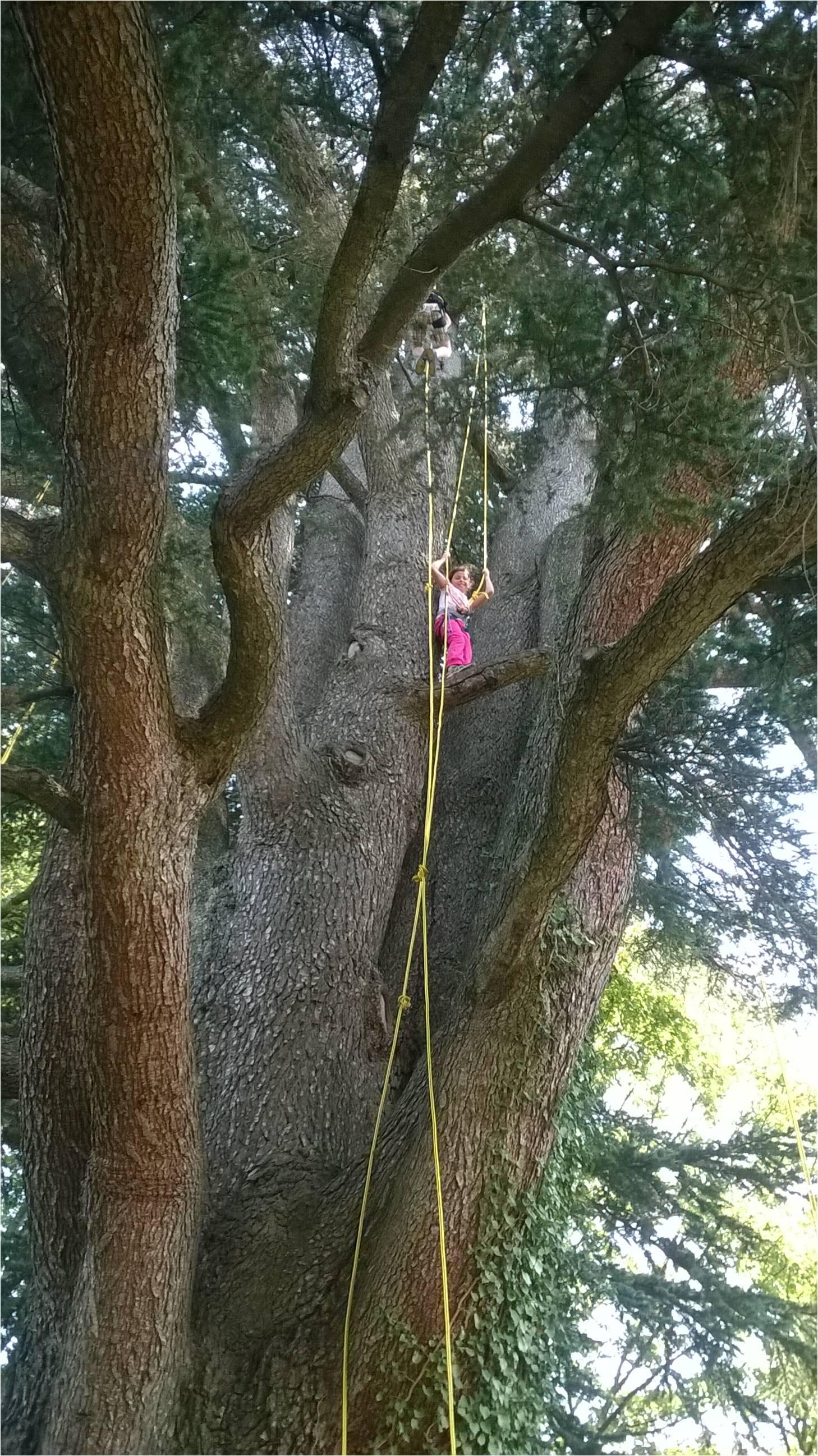 Au fil de l 39 arbre provence du 05 juillet au 19 juillet - Arbre provencal ...